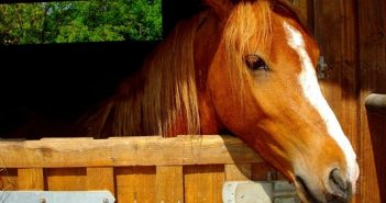 Казахстанские ученые вывели идеальную лошадь для казы