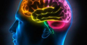 Биологи обнаружили выключатель чувства голода в мозге человека