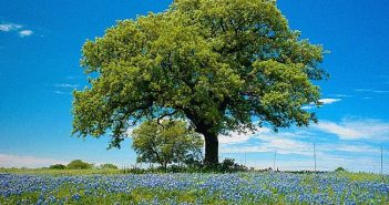 Деревья продлевают человеку жизнь и лечат от болезней