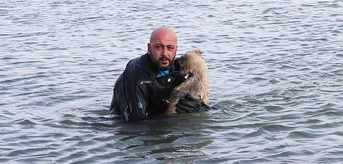 Мусульманин спас собаку из ледяной воды